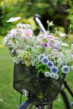 Lovely country flowers