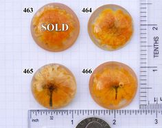 Orange flowers cabochons Dried flowers resin handmade cabochons for crafts & custom jewelry Cute cabs yellow Jewellery making supplies Unique Plants, Real Plants, Personalized Jewelry, Custom Jewelry, Table Accessories, Jewelry Accessories, Jewelry Ideas, Dandelion Paperweight, Yellow Jewelry