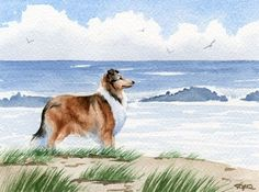 Hey, I found this really awesome Etsy listing at https://www.etsy.com/listing/54269851/rough-collie-beach-dog-watercolor-art