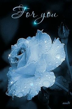 Beauty of a crystal watery rose.