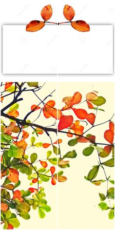 Autumn Leaves At The Top Of A Rectangular Shape Stock Photo - Image of branch, geometric: 179763034 Gift Cards, Greeting Cards, Text Frame, Cool Diy Projects, Autumn Leaves, Diy And Crafts, Invitations, Shapes, Stock Photos