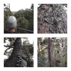 Tsitsikamma Canopy Tour, South Africa. A must-do! | One Footprint On The World Child Friendly, Eco Friendly, Garden Route, Footprint, Canopy, South Africa, Tours, Activities, World