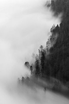 I chose this photo because I think the fog and the trees looks really cool. I also think making this photo black and white made it really intense!
