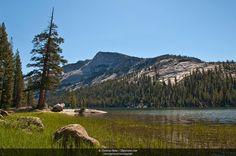 blocking deck areas wild animals | Early morning at Tenaya Lake in Yosemite National Park, California ...