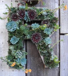 Flora Grubb Gardens, Francisco - beautiful arrangement of succulents placed in form of a letter