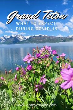 Everything you need to know about visiting Grand Teton National Park in 2020 | What are the COVID-19 safety protocols at Grand Teton National Park | What's open and what is closed at Grand Teton during the 2020 pandemic Usa Travel, Solo Travel, Luxury Travel, Grand Teton National Park, National Parks, Whats Open, 50 States, Travel Around, Travel Guides