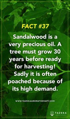 Fact No. 37 #TazekaFacts