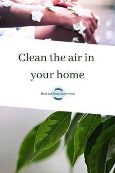 Filthy air can bring disease and damage your health. Here are some tips to make the air in your home much cleaner in a natural way. Who says cleaning needs to be a chore? #cleaninghome #cleaning #cleanair #freshair #healthyhabits #health Do Everything, Healthy Habits, Mindfulness, Cleaning, Lifestyle, Natural, Tips, How To Make, Articles