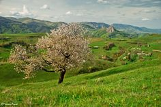 ROMANIA, TRASCAU MOUNTAINS, BEAUTIFUL COUNTRYSIDE