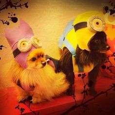 Minions DIY dog costume, see more at http://diyready.com/diy-dog-costume-ideas-halloween-fun-for-your-pooch