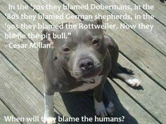 Cesar Milan Quote about pitbulls, and dog breeds.