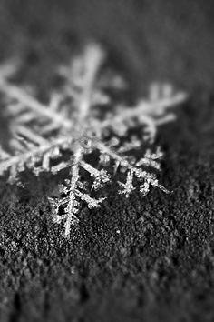 snowflake+closeup+2+-+Android+Wallpapers+HD