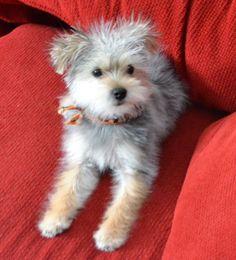 Fuzzy Bella!