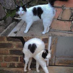 Today in Rwanda and 5 years ago in Rwanda (bottom picture from 2012). What's going on here? #catsofcoffee #catswithhearts #rwandan
