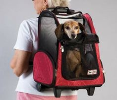 As a Backpack