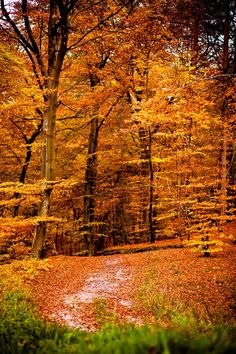 Autumn by Andrew Sipajlo on 500px