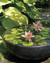 Image result for container water gardens