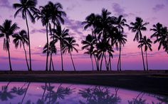 Palms at Sunset Oahu. What a way to spend an evening