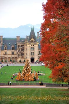 Biltmore House with the giant Christmas tree and fall colors - in Asheville. Candlelight tour.