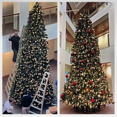 Cadigan Alumni Center's Christmas Tree! | Repinned from BCAlumni