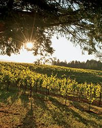 Best California Wineries to Visit: Sonoma County, Mendocino, Bay Area, Santa Barbara and Paso Robles