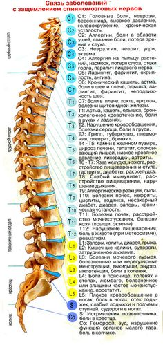 Spinal health can tell a lot .- Spinal health can say a lot about the general condition of the body Skillful hands hacks xvhhjaummj iuoqicwxc kqefo - Health And Beauty, Health And Wellness, Health Fitness, Psoas Release, Spine Health, Anatomy And Physiology, Tai Chi, Chakras, Health Remedies