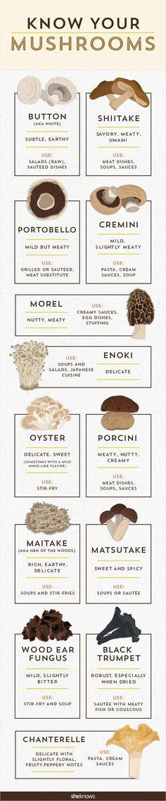 Hongos  varios clasificacion Mushroom guide