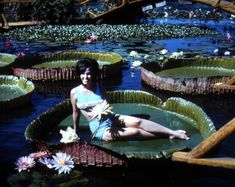 Now gone Slocum's Water Gardens in Winter Haven. This is the almost obligatory shot of someone on a Victoria amazonica lilypad.