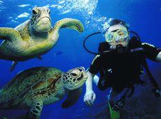 Scuba diving in the Great Barrier Reef is on my bucket list!