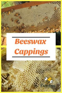 Cleaning and Processing beeswax capping for projects is a fun pastime for beekeepers. Beeswax cappings make beautiful candles. Beekeeping For Beginners, Bee Swarm, Backyard Beekeeping, Bee Friendly, Bee Crafts, Beeswax Candles, Buy Candles, Beautiful Candles, Hobby Farms