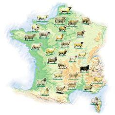 Avec plus de 30 races répertoriées, la France dispose d'une production ovine très diversifiée en termes de régions et de types de production.