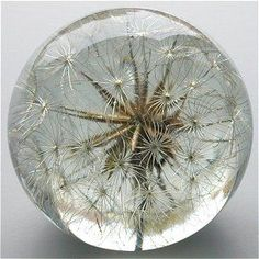 Large unique paperweight with dried flower inside. Love the simplicity of… Dandelion Clock, Art Of Glass, Glass Marbles, Glass Paperweights, Glass Ball, Crystal Ball, Hand Blown Glass, Bauhaus, Paper Weights