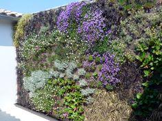 Murs végétalisés | Serev Environnement