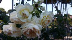 roseto | nonsonochipensi