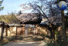 Japan. Photo by Klaudia Czarlińska. #japonia #japan #czarlińska #cspa #centrumstudiówpolskaazja #wakacje #holiday #travel #podróż #azja #asia #日本  #blue #sky #wieżowiec #natura #nature #view #religion #buddhism #mountains #pink #cherry #blossom #spring #temple