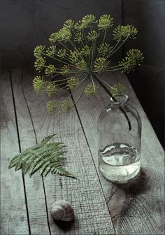 Dill flowers available for July Scottish Weddings. Please contact the Stockbridge Flower Company, Edinburgh for more details.