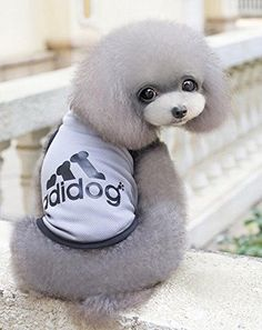 """Summer Vest Lightweight Breathable Clothing Sleeveless Jersey end with Reason """"adidog"""" Very Beautiful Clothes For Small Medium Dog Puppy 3 sizes S / M / L ** You can get additional details at"""