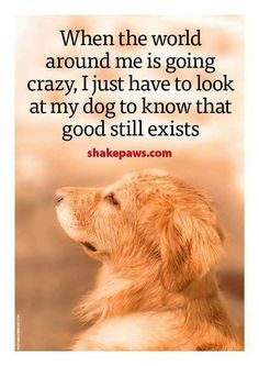 """Hope you're doing well.From your friends at phoenix dog in home dog training""""k9katelynn"""" see more about Scottsdale dog training at k9katelynn.com! Pinterest with over 20,800 followers! Google plus with over 180,000 views! You tube with over 500 videos and 60,000 views!! LinkedIn over 9,300 associates! Proudly Serving the valley for 11 plus years! Can now check us out on instantgram! K9katelynn"""