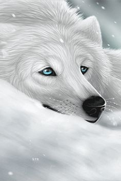 Wolves, Husky, Dogs, Animals, Animaux, Doggies, A Wolf, Animal, Wolf