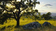 oak tree hd 32969 silhouette