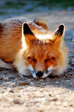 """rabbit to far , paws to tired, me takeing nap...night"""
