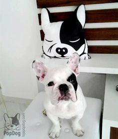 French Bulldog, or Boston Terrier pillow, Bulldog francese / / cuscino Boston Terrier di PopDogStore su Etsy