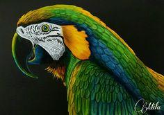 Macaw by Mila Gutierraz