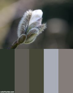 Magnolia Bud Color Scheme