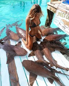 """BAHAMAS – Compass Cay Marina, Compass Cay, Exuma, British Overseas Territory. This is a 2016 Instagram picture from Sarah Kohan @moonstrucktraveller. Sarah is an Australian model and travel blogger on moonstrucktraveller. The sign says """"Meet our Pet Sharks."""" They're harmless nurse sharks, by the way. https://www.google.ca/maps/place/Compass+Cay/@24.2608467,-76.5478534,13z/data=!4m8!1m2!2m1!1scompass+cay+marina+!3m4!1s0x0:0x9503c12b25b5004b!8m2!3d24.2606396!4d-76.5129733"""