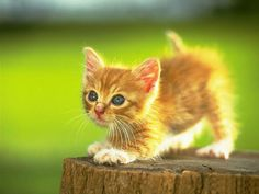 Cute Kittens Fly in Slow Motion to Hip Hop Dubstep http://stg.do/!LQXob