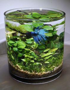 plantes aquarium dans leur vase en verre cylindrique
