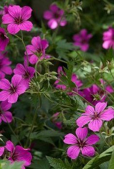 vaste-planten-die-vlinders-en-bijen-aantrekken