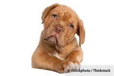 identificar las mociones de su perro http://mascotas.mercola.com/sitios/mascotas/archivo/2013/12/16/como-identificar-las-emociones-de-su-perro.aspx