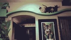 California home owner turns home into one big play house for adopted cats.